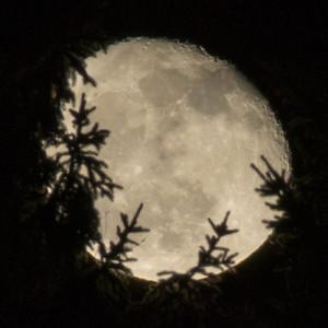 månen-i-buskas