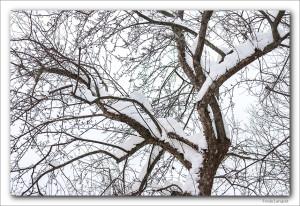 tre-i-vinterhagen