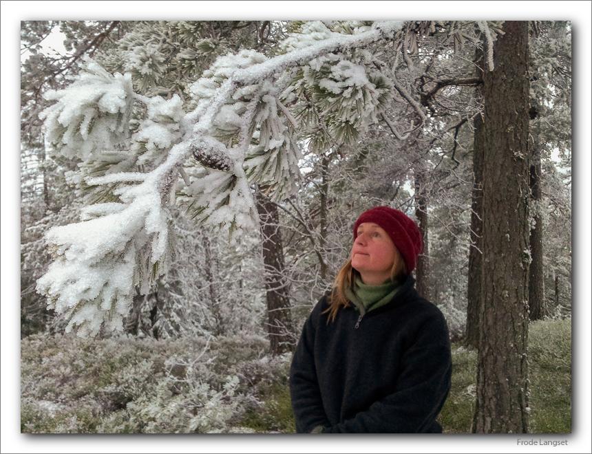 ekornspor i snø